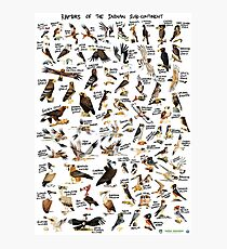 Raptors of the Indian Subcontinent Photographic Print