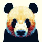 Panda - Colorful Animals by raquelcatalan