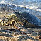 Honu Sunbathing by photosbypamela