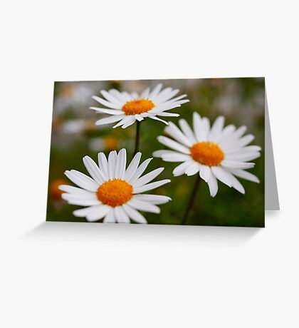 Daisies in my garden always make me smile. Greeting Card