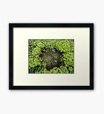 Above a Clearing Framed Print