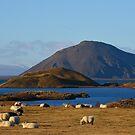 Lake Myvatn Iceland by Chris Thaxter