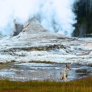 Yellowstone National Park by chaneyforkriver