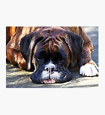 Such is Life -Boxer Dogs Series- Photographic Print