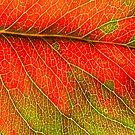 Abstract Leaf Color Study 3 by Kari Sutyla