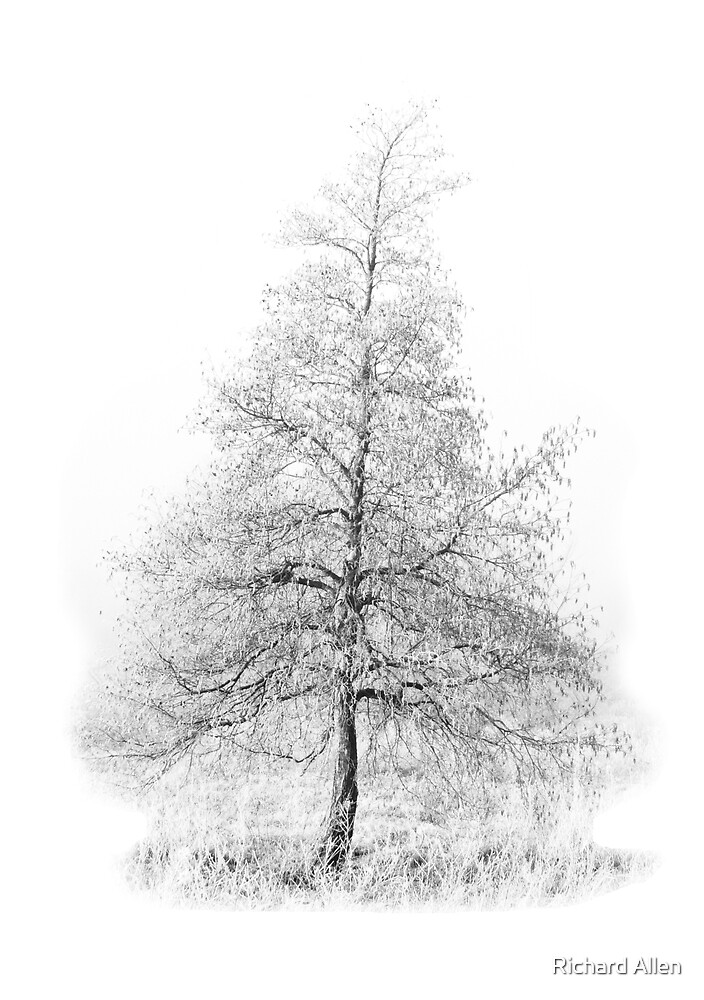 Fir Tree by Lea Valley Photographic