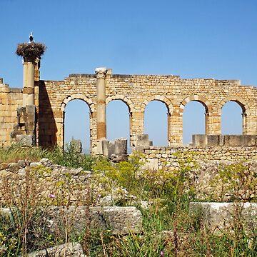 Ruins of Volubilis, Morocco by probono