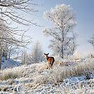 Glen Shiel Misty Winter Deer by Grant Glendinning