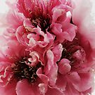 Peach Double Flower by Emma-Louise Bussey