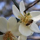 Bee in Flower by jansimpressions