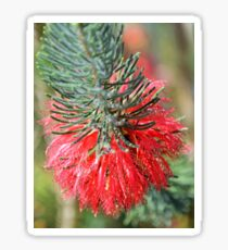 RED BOTTLE BRUSH Sticker