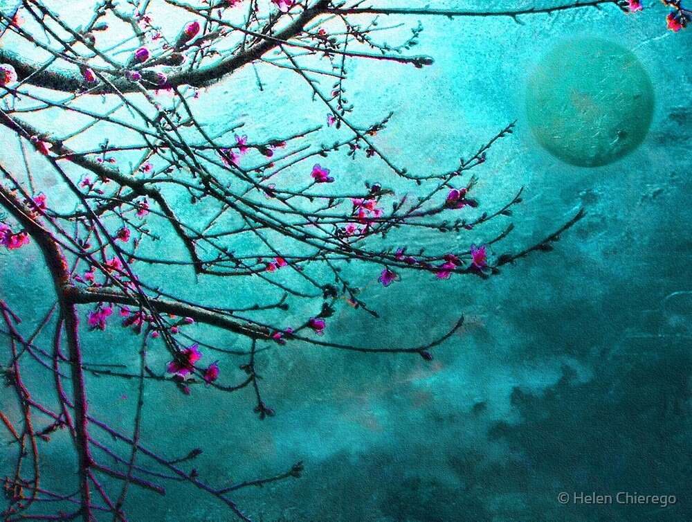 Nectarine Blossom by © Helen Chierego
