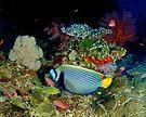 Angle of Fiji by photosbyflood