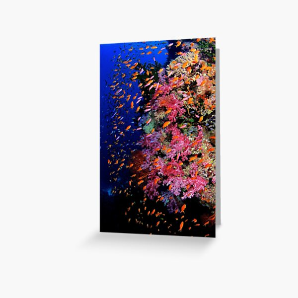 One Fish Two Fish Red Fish Blue Fish Greeting Card