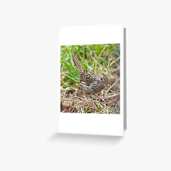 WREN ~ Striated Fieldwren V5dbgUfT by David Irwin Greeting Card