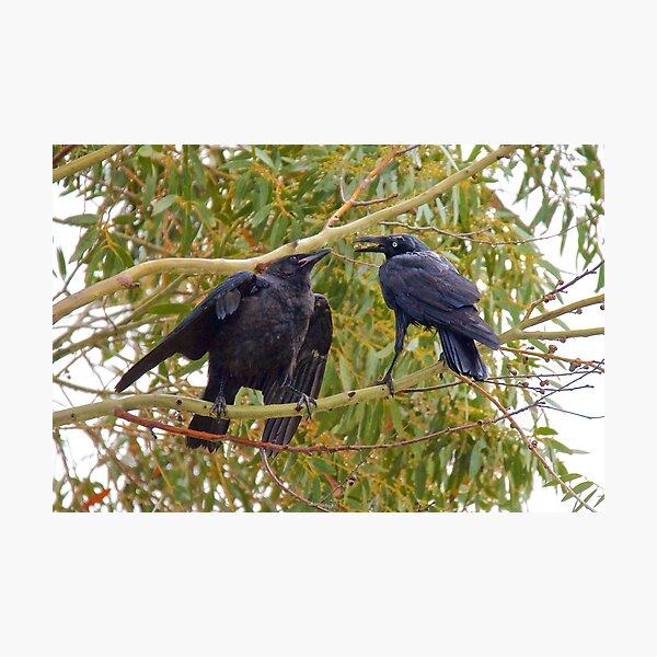 RAVEN ~ Forest Raven 29TYEFUX by David Irwin Photographic Print