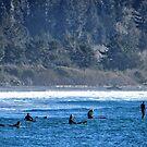 Redwoods and Ocean by marilyn diaz