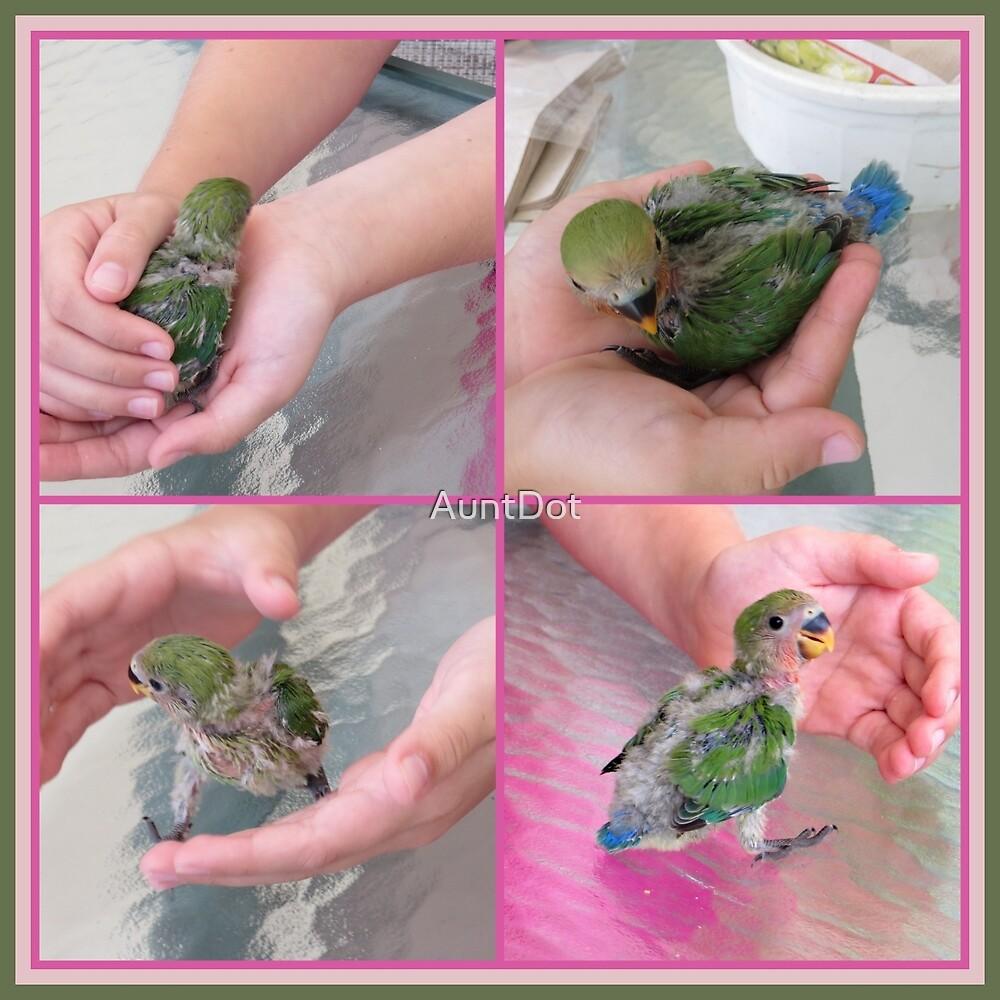 Baby Lovebird by AuntDot