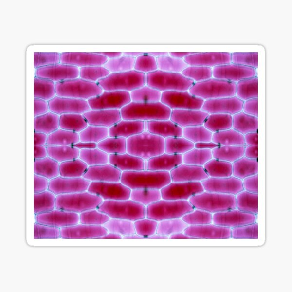 Fruit and Veg Series- Red onion Sticker