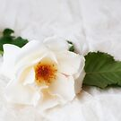 Shades of White by Ellesscee