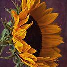 Sunflower by Ellesscee
