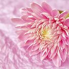 Pink on Pink by Ellesscee