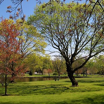 Spring in Connecticut by oldfool148