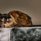 Cat by Lea Valley Photographic