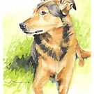 shepherd dog watercolor by Mike Theuer