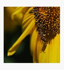 The Bees Knee Photographic Print