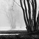 Fog by boxx2genetica