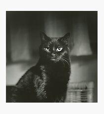 Portrait of black cat square black and white analogue medium format film Hasselblad  photograph Photographic Print