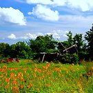 Summer of 2014 by Larry Llewellyn