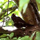 simply blackbird by sebmcnulty