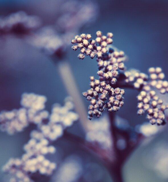 Archipelago Flowers by boxx2genetica