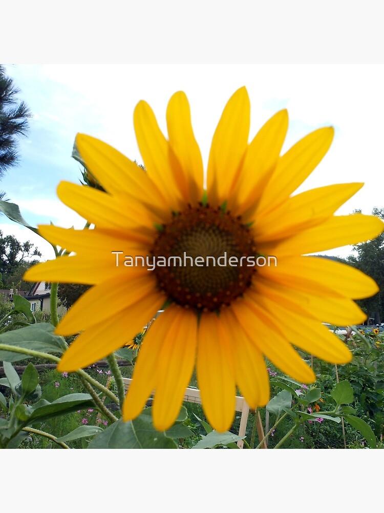 Sun Flower by Tanyamhenderson