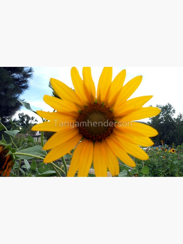 Sun Flower by Tanyamhenderson