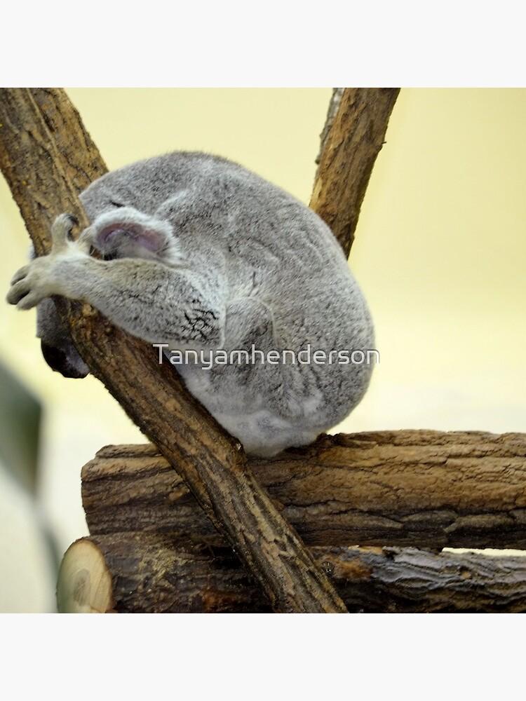 Shy Koala  by Tanyamhenderson