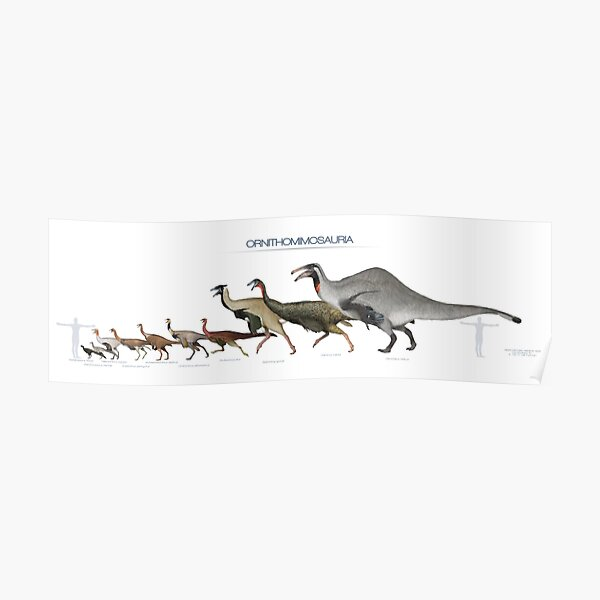 Size of some Ornithomimosaurs Poster