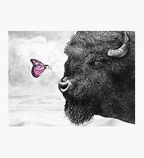 Bison and Butterfly (landscape format) Photographic Print