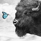 Bison and Butterfly by Eric Fan
