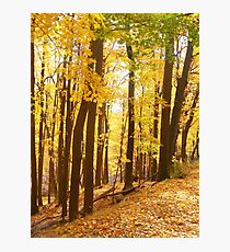 Golden Fall Photographic Print