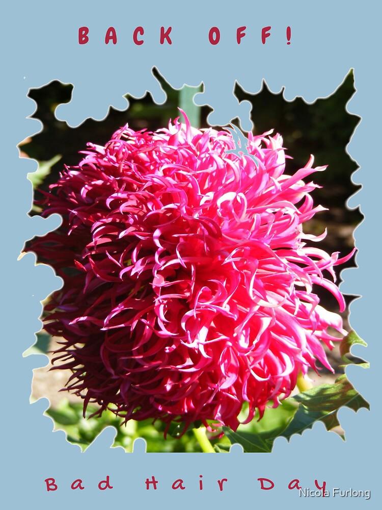 BAD HAIR DAY, PINK DAHLIA FLOWER by nicolafurlong