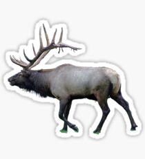 Willow Wapiti elk Sticker