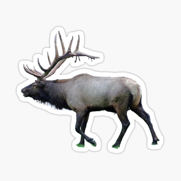 Willow Wapiti elk Sticker