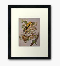 GOLDEN ORIOLES - water-colour - sold Framed Print