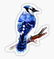 Watercolor blue jay  Sticker