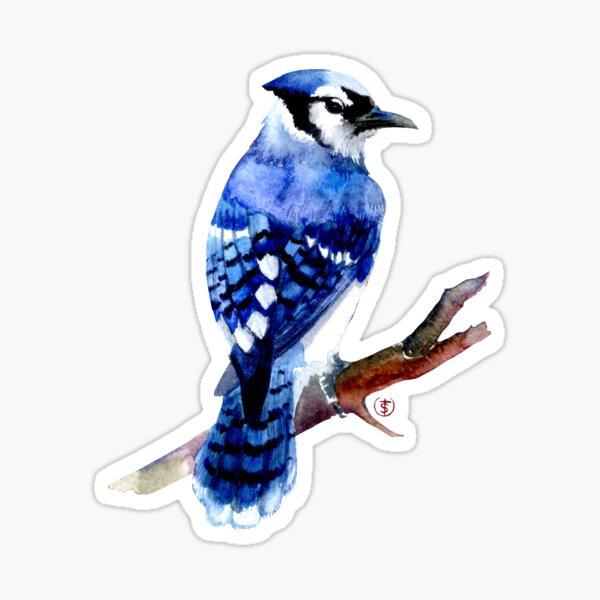Watercolor blue jay  Sticker