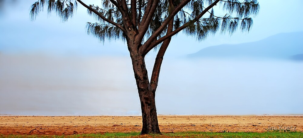 The foggy Coastline, North Queensland by Imi Koetz