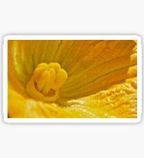 Pumpkin Blossom Sticker